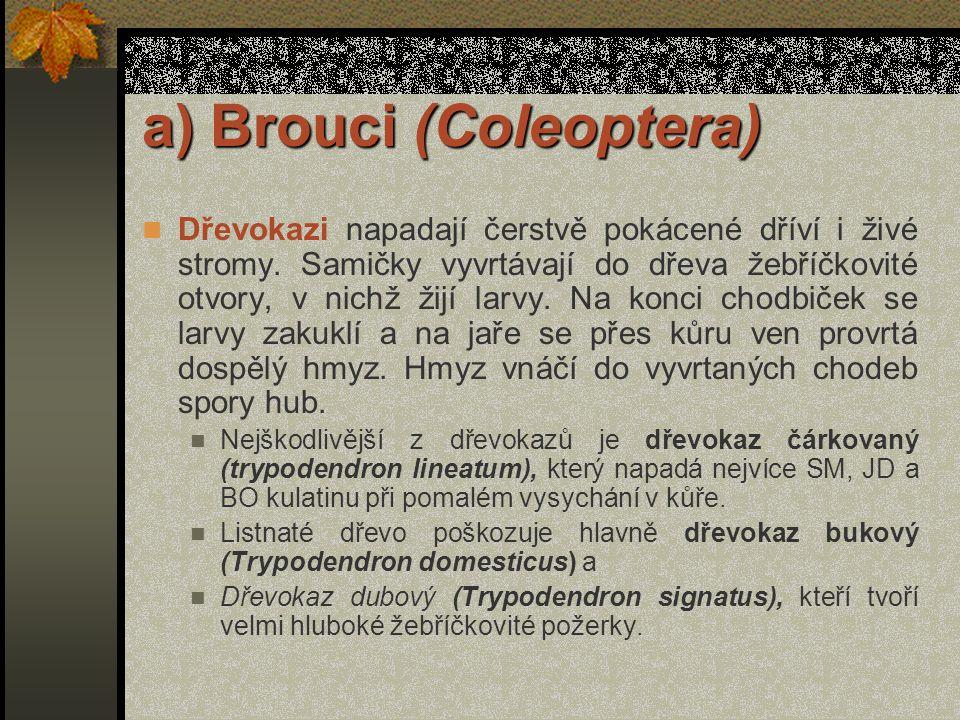 a) Brouci (Coleoptera) V přírodě i v obydlích se nachází velké množství rodů a druhů dřevokazných brouků. Největšími škůdci našich stromů jsou z nich