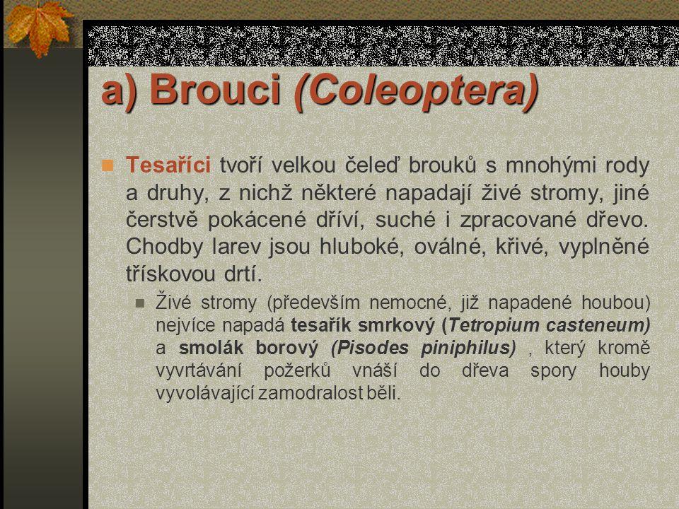 a) Brouci (Coleoptera) Tesaříci tvoří velkou čeleď brouků s mnohými rody a druhy, z nichž některé napadají živé stromy, jiné čerstvě pokácené dříví, suché i zpracované dřevo.
