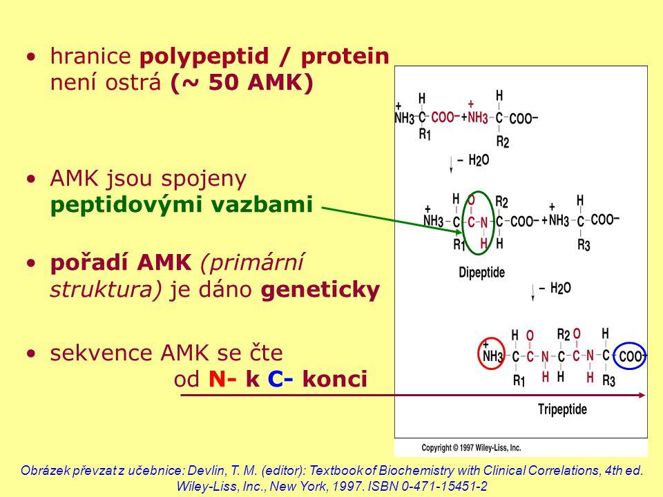 hranice polypeptid / protein není ostrá (~ 50 AMK) AMK jsou spojeny peptidovými vazbami pořadí AMK (primární struktura) je dáno geneticky sekvence AMK