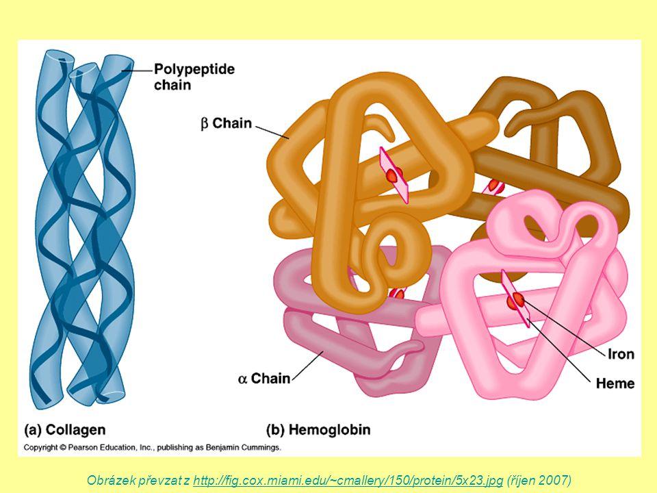 Obrázek převzat z http://fig.cox.miami.edu/~cmallery/150/protein/5x23.jpg (říjen 2007)http://fig.cox.miami.edu/~cmallery/150/protein/5x23.jpg