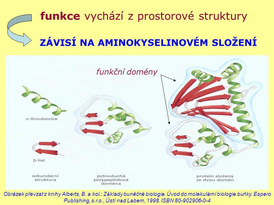 funkce vychází z prostorové struktury ZÁVISÍ NA AMINOKYSELINOVÉM SLOŽENÍ funkční domény Obrázek převzat z knihy Alberts, B. a kol.: Základy buněčné bi