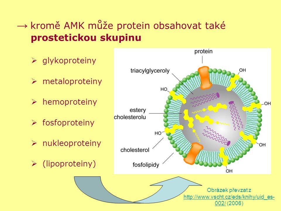 → kromě AMK může protein obsahovat také prostetickou skupinu  glykoproteiny  metaloproteiny  hemoproteiny  fosfoproteiny  nukleoproteiny  (lipop