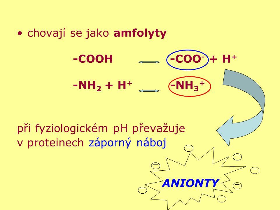 chovají se jako amfolyty -COOH -COO - + H + -NH 2 + H + -NH 3 + při fyziologickém pH převažuje v proteinech záporný náboj ANIONTY