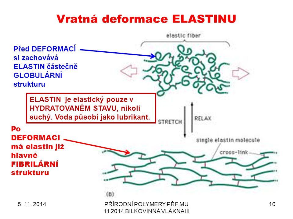 Vratná deformace ELASTINU 5. 11. 2014PŘÍRODNÍ POLYMERY PŘF MU 11 2014 BÍLKOVINNÁ VLÁKNA III 10 Před DEFORMACÍ si zachovává ELASTIN částečně GLOBULÁRNÍ