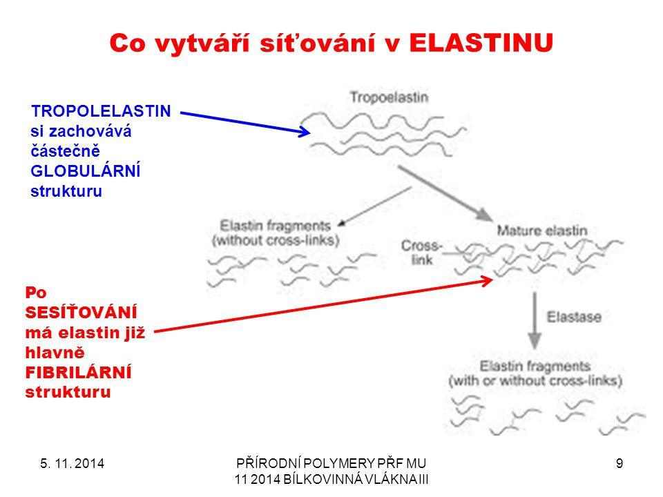 Co vytváří síťování v ELASTINU 5. 11. 2014PŘÍRODNÍ POLYMERY PŘF MU 11 2014 BÍLKOVINNÁ VLÁKNA III 9 TROPOLELASTIN si zachovává částečně GLOBULÁRNÍ stru