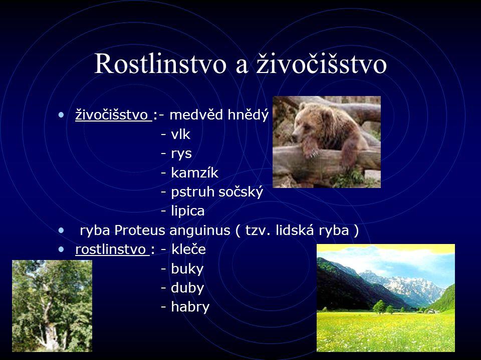 Rostlinstvo a živočišstvo živočišstvo :- medvěd hnědý - vlk - rys - kamzík - pstruh sočský - lipica ryba Proteus anguinus ( tzv. lidská ryba ) rostlin