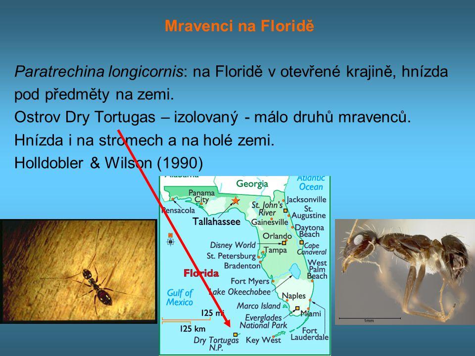 Mravenci na Floridě Paratrechina longicornis: na Floridě v otevřené krajině, hnízda pod předměty na zemi.