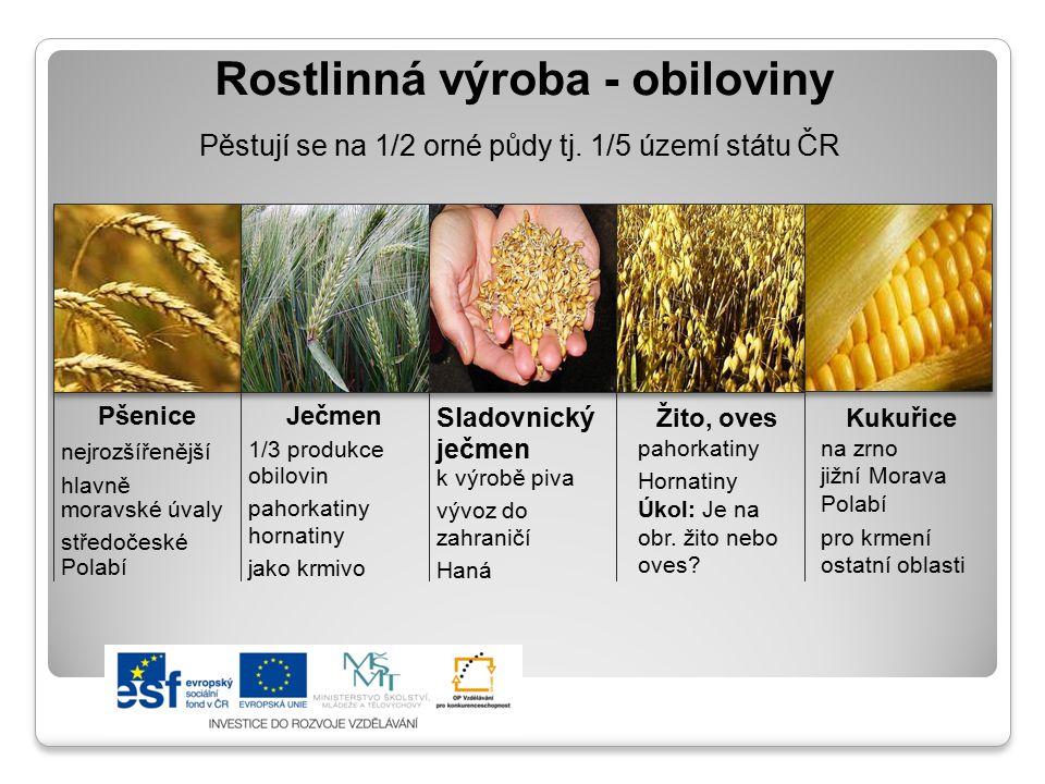 Rostlinná výroba - obiloviny Pěstují se na 1/2 orné půdy tj. 1/5 území státu ČR Pšenice nejrozšířenější hlavně moravské úvaly středočeské Polabí Ječme