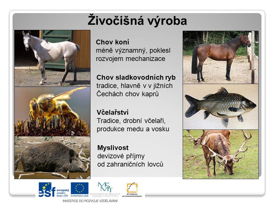 Živočišná výroba Chov koní méně významný, poklesl rozvojem mechanizace Chov sladkovodních ryb tradice, hlavně v v jižních Čechách chov kaprů Včelařstv