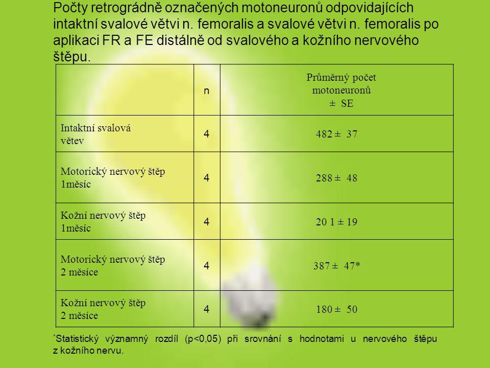 Počty retrográdně označených motoneuronů odpovidajících intaktní svalové větvi n. femoralis a svalové větvi n. femoralis po aplikaci FR a FE distálně