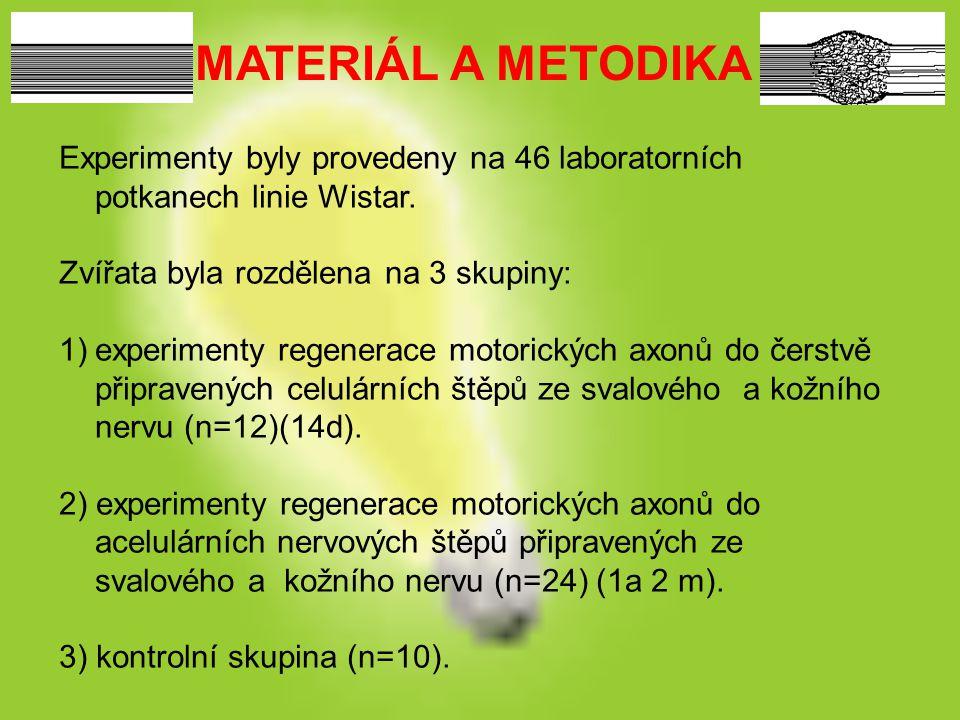 MATERIÁL A METODIKA Experimenty byly provedeny na 46 laboratorních potkanech linie Wistar. Zvířata byla rozdělena na 3 skupiny: 1)experimenty regenera