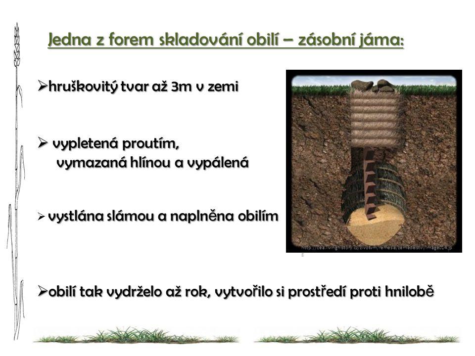 ozim Jedna z forem skladování obilí – zásobní jáma: http://cea.livinghistory.cz/zivotvm/remesla/zemedelstvi/image014.jp g  hruškovitý tvar až 3m v ze