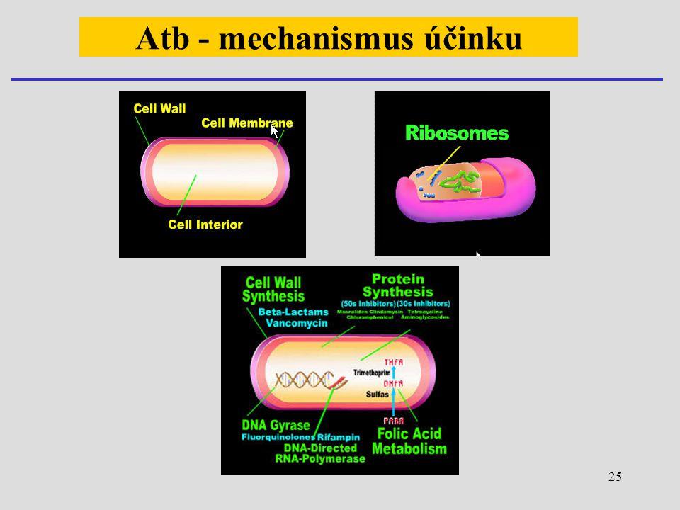 25 Atb - mechanismus účinku
