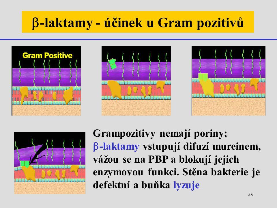 29  -laktamy - účinek u Gram pozitivů Grampozitivy nemají poriny;  -laktamy vstupují difuzí mureinem, vážou se na PBP a blokují jejich enzymovou fun