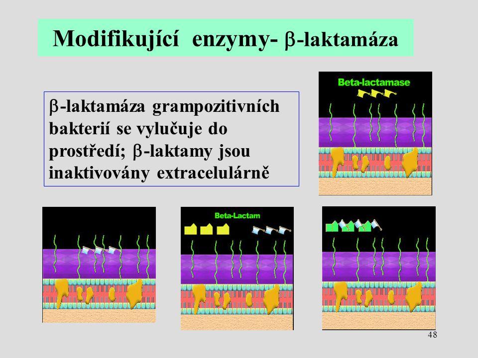 48  -laktamáza grampozitivních bakterií se vylučuje do prostředí;  -laktamy jsou inaktivovány extracelulárně Modifikující enzymy-  -laktamáza
