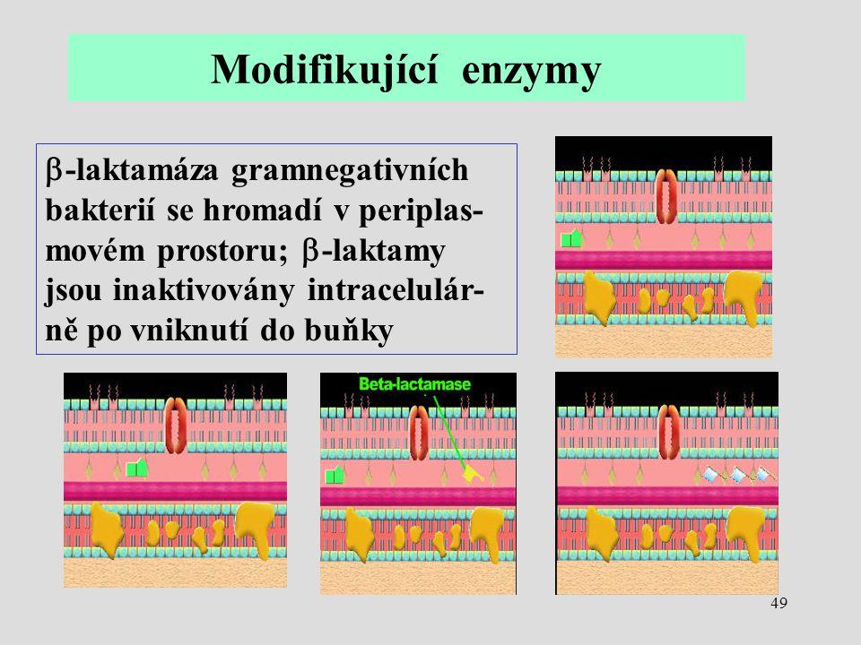49  -laktamáza gramnegativních bakterií se hromadí v periplas- movém prostoru;  -laktamy jsou inaktivovány intracelulár- ně po vniknutí do buňky Mod