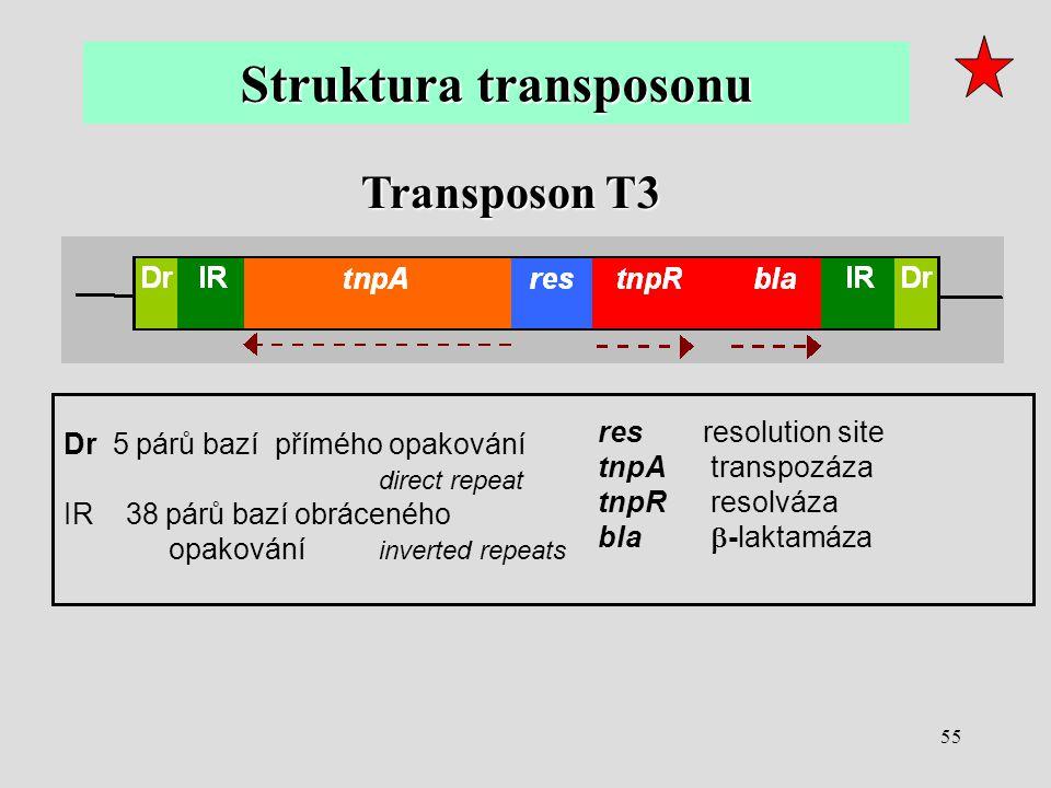 55 Transposon T3 Dr 5 párů bazí přímého opakování direct repeat IR 38 párů bazí obráceného opakování inverted repeats res resolution site tnpA transpo