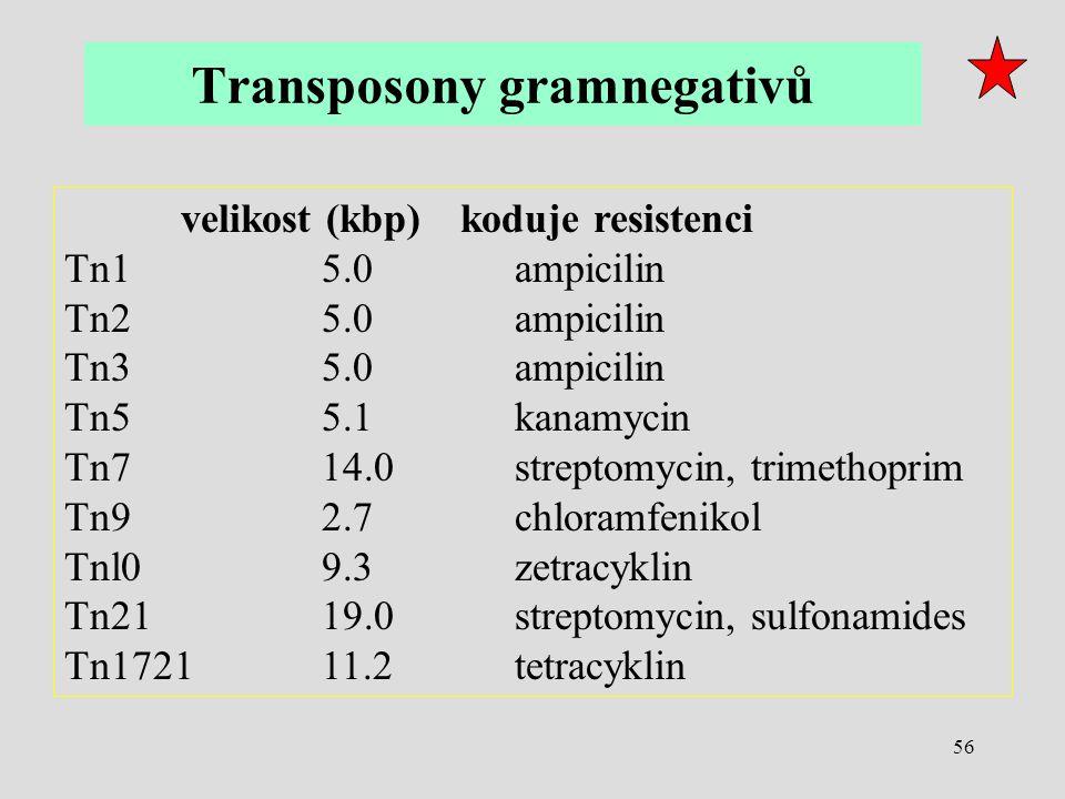 56 velikost (kbp) koduje resistenci Tn1 5.0 ampicilin Tn2 5.0 ampicilin Tn3 5.0 ampicilin Tn5 5.1 kanamycin Tn7 14.0 streptomycin, trimethoprim Tn9 2.