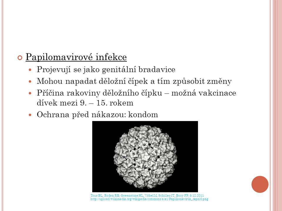 Papilomavirové infekce Projevují se jako genitální bradavice Mohou napadat děložní čípek a tím způsobit změny Příčina rakoviny děložního čípku – možná