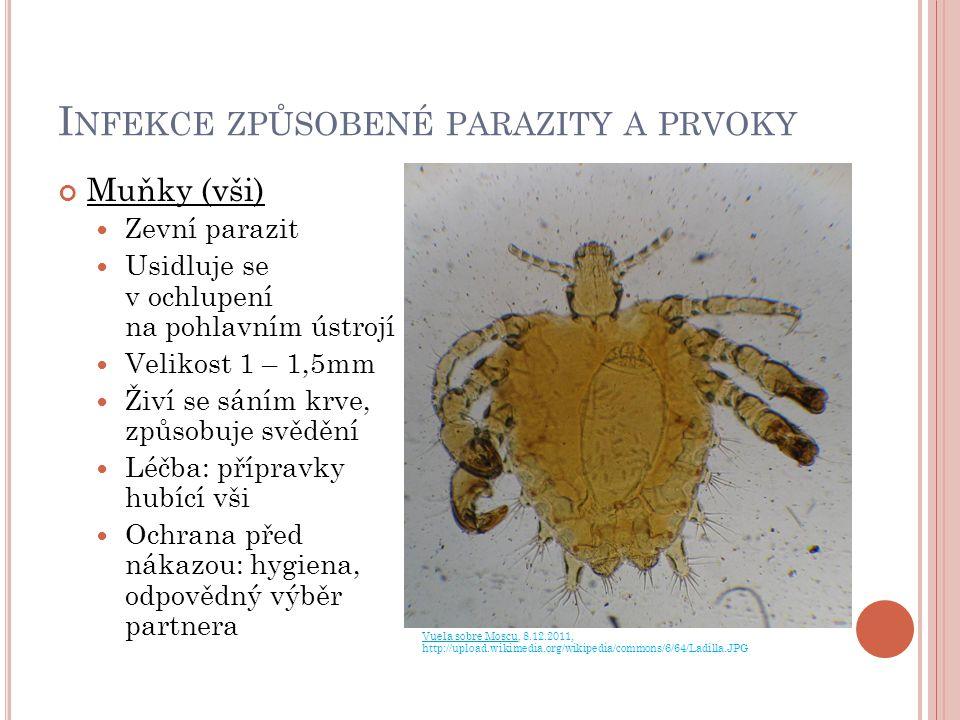 I NFEKCE ZPŮSOBENÉ PARAZITY A PRVOKY Muňky (vši) Zevní parazit Usidluje se v ochlupení na pohlavním ústrojí Velikost 1 – 1,5mm Živí se sáním krve, způ