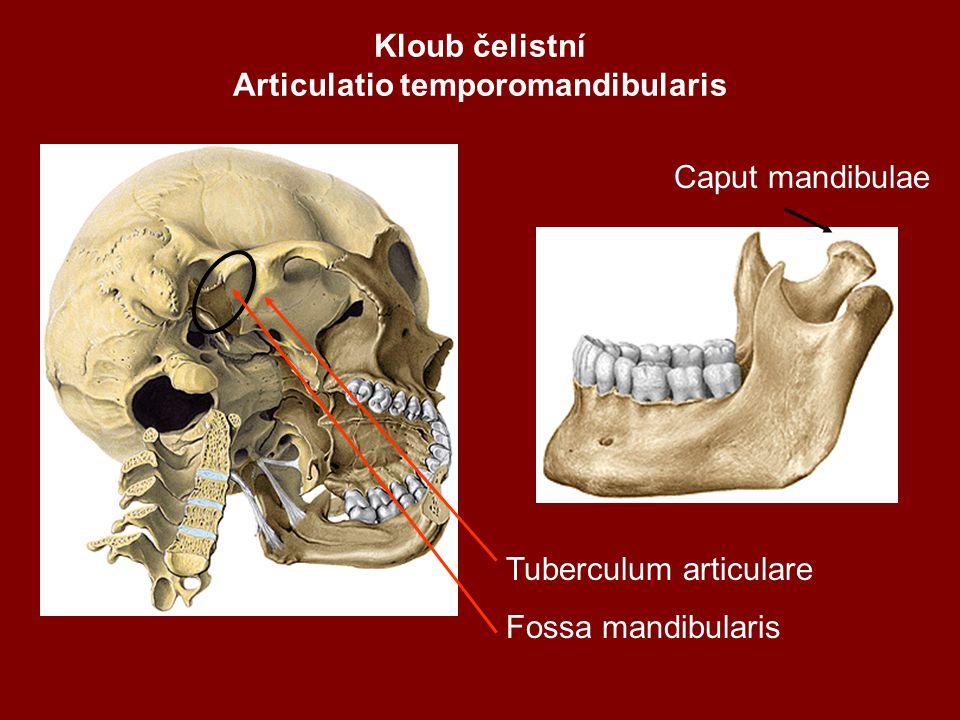 Kloub čelistní Articulatio temporomandibularis Caput mandibulae Tuberculum articulare Fossa mandibularis