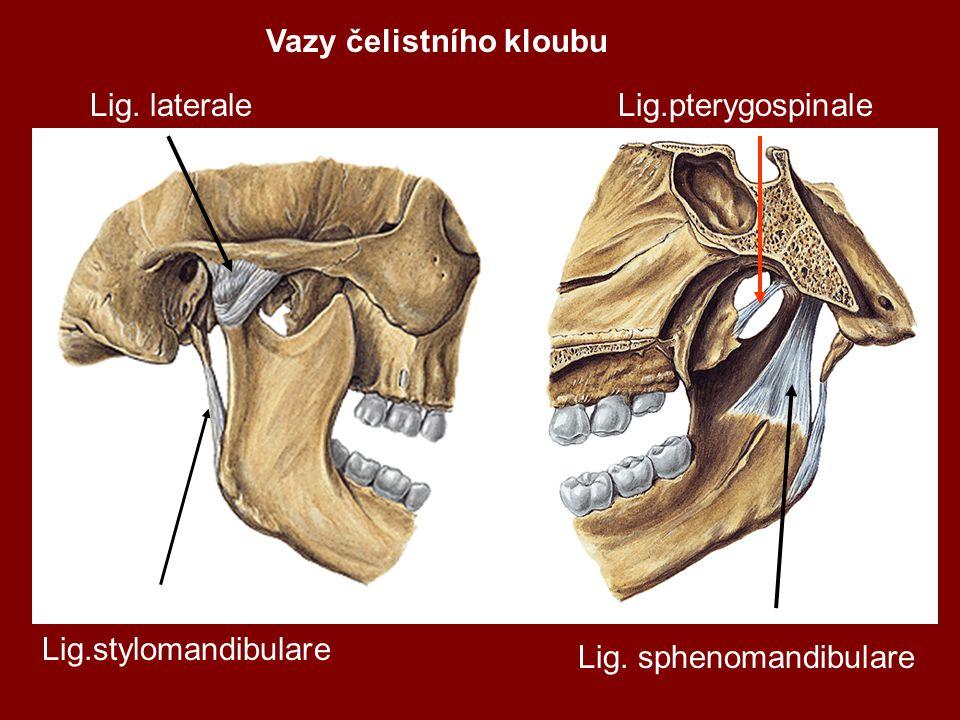 Vazy čelistního kloubu Lig.stylomandibulare Lig. laterale Lig. sphenomandibulare Lig.pterygospinale