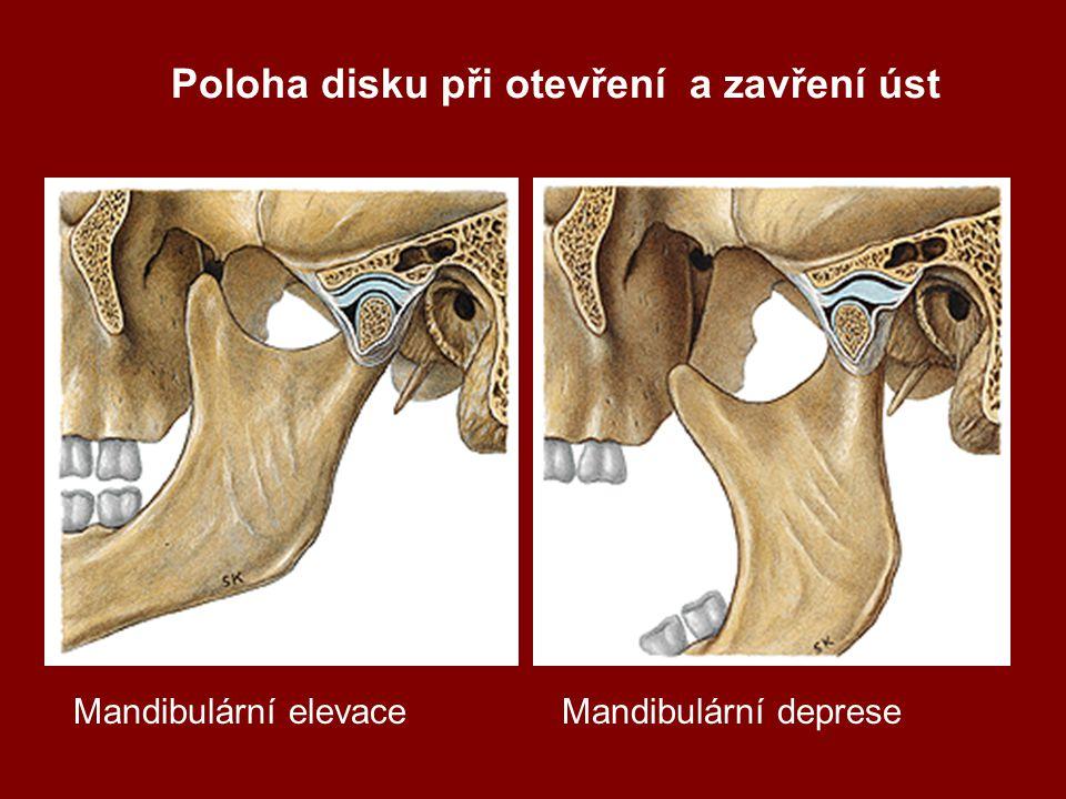 Poloha disku při otevření a zavření úst Mandibulární elevaceMandibulární deprese