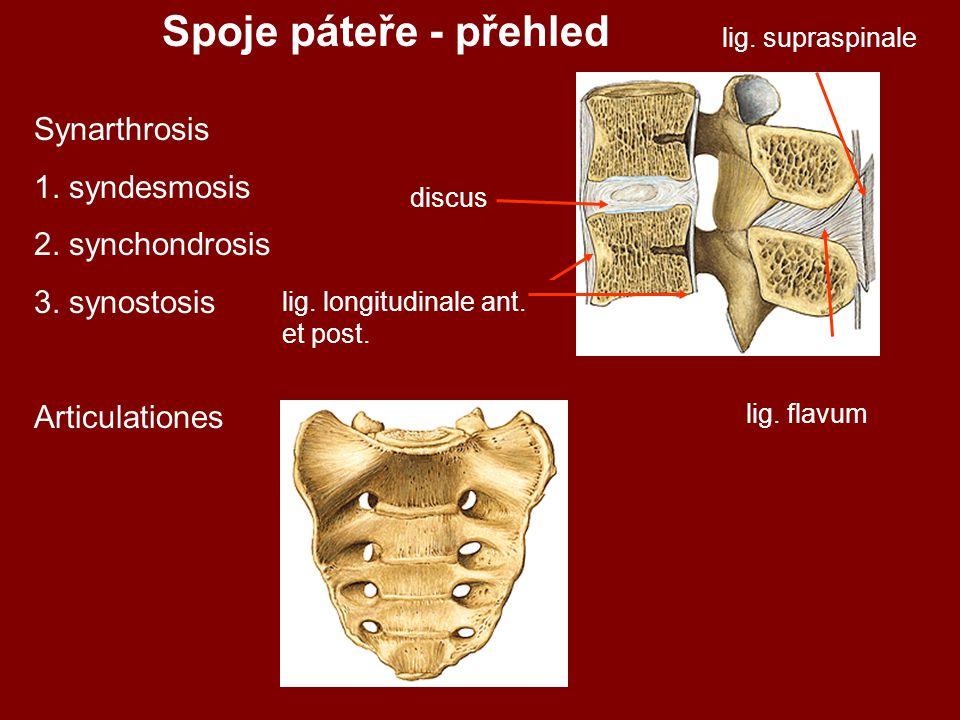 lig.supraspinale discus lig. longitudinale ant. et post.