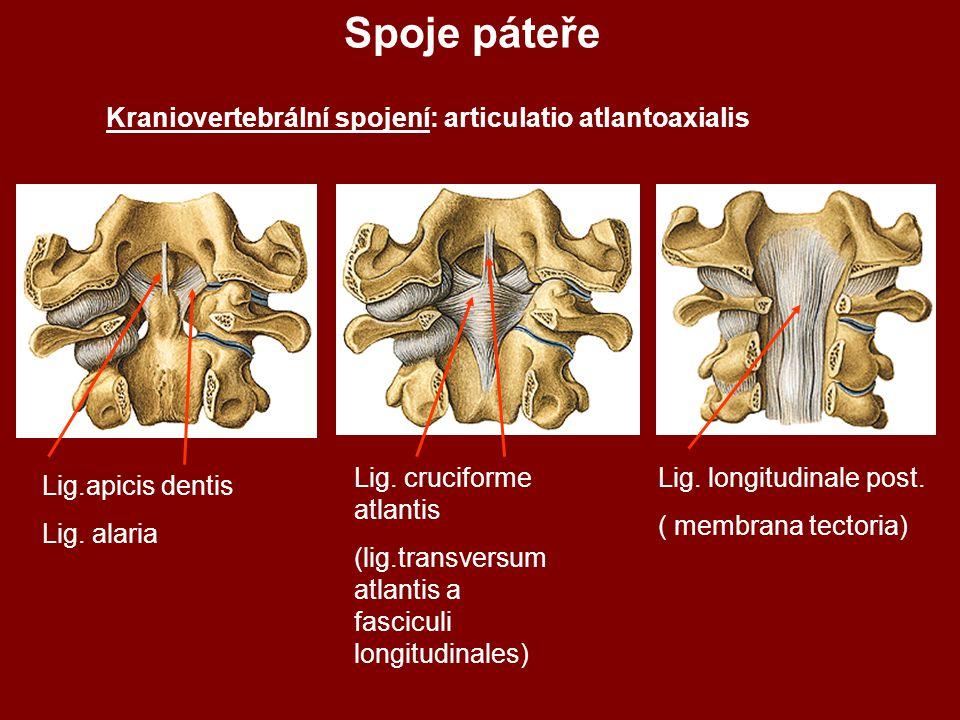 Spoje páteře Kraniovertebrální spojení: articulatio atlantoaxialis Lig.apicis dentis Lig.