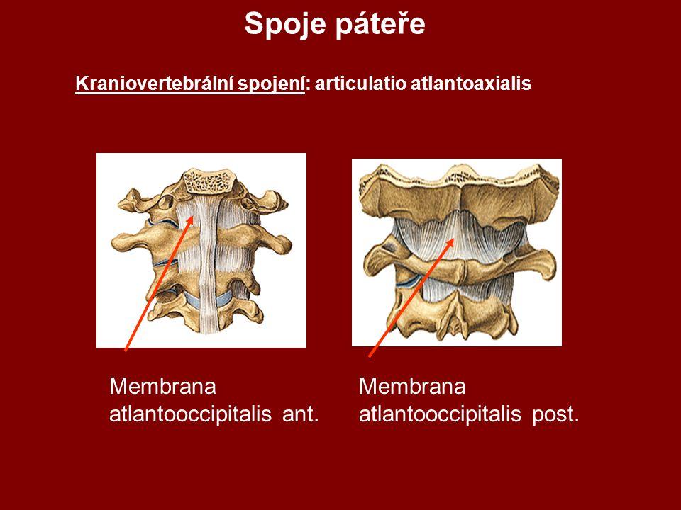 Spoje páteře Kraniovertebrální spojení: articulatio atlantoaxialis Membrana atlantooccipitalis post.