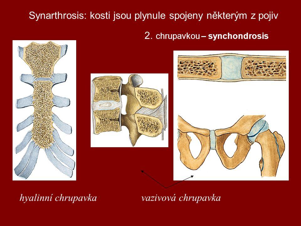 Synarthrosis: kosti jsou plynule spojeny některým z pojiv.