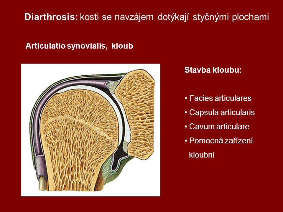 Diarthrosis: kosti se navzájem dotýkají styčnými plochami Articulatio synovialis, kloub Stavba kloubu: Facies articulares Capsula articularis Cavum articulare Pomocná zařízení kloubní