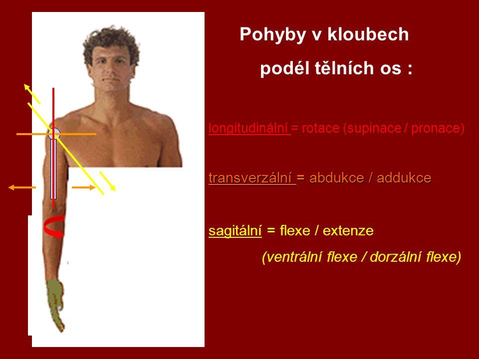 Pohyby v kloubech podél tělních os : longitudinální = rotace (supinace / pronace) transverzální = abdukce / addukce sagitální = flexe / extenze (ventrální flexe / dorzální flexe)