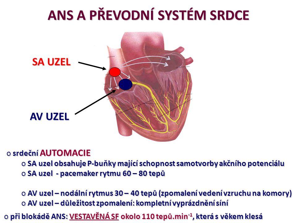 ANS A PŘEVODNÍ SYSTÉM SRDCE o srdeční AUTOMACIE o SA uzel obsahuje P-buňky mající schopnost samotvorby akčního potenciálu o SA uzel - pacemaker rytmu