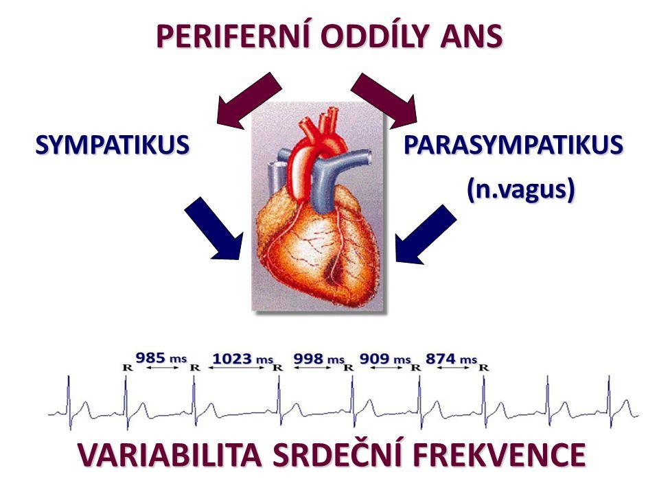o VSF – změny v SF na úrovni po sobě jdoucích tepů - RR o VSF– reflektuje regulační funkci ANS – výsledek zejména respiračně vázané aktivity vagu – fyziol.