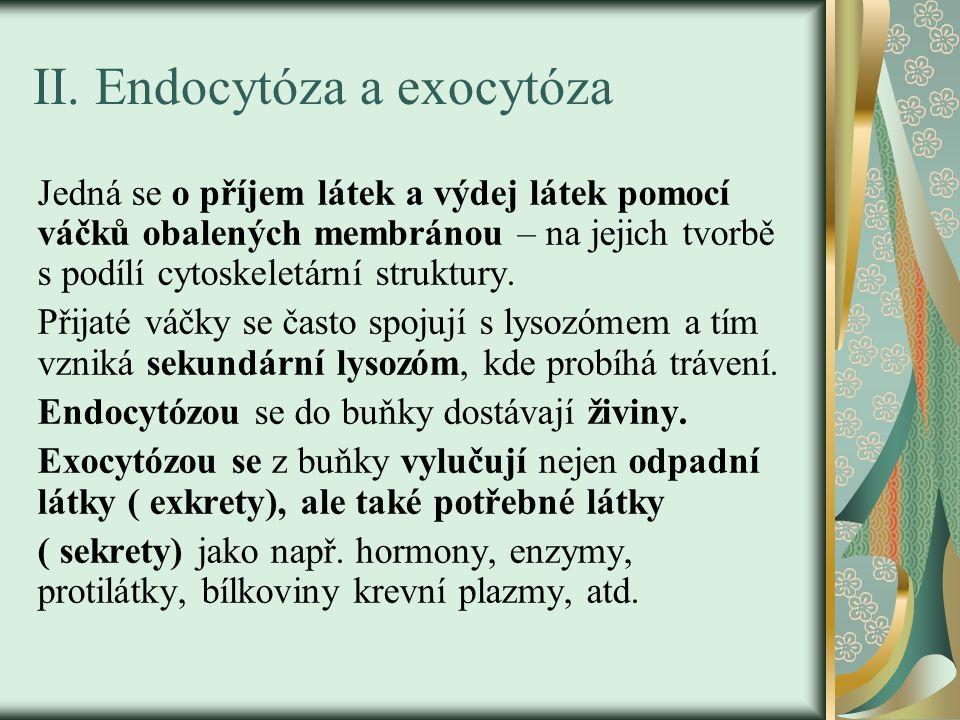 II. Endocytóza a exocytóza Jedná se o příjem látek a výdej látek pomocí váčků obalených membránou – na jejich tvorbě s podílí cytoskeletární struktury