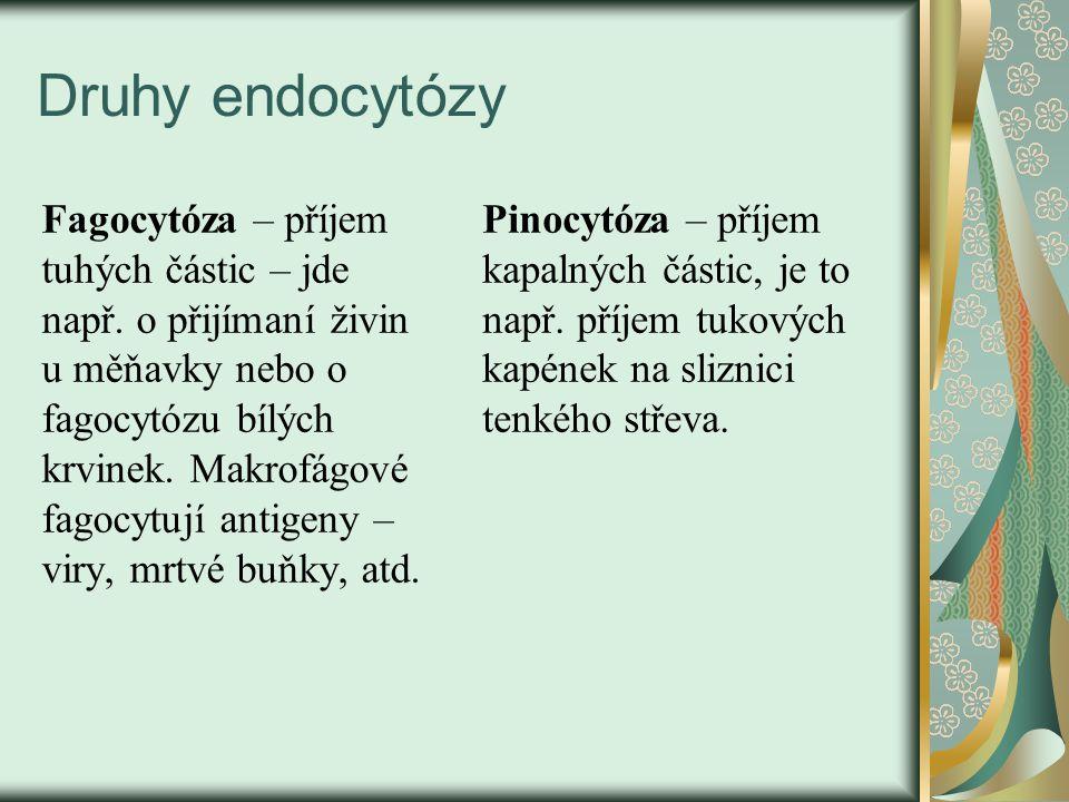 Druhy endocytózy Fagocytóza – příjem tuhých částic – jde např. o přijímaní živin u měňavky nebo o fagocytózu bílých krvinek. Makrofágové fagocytují an