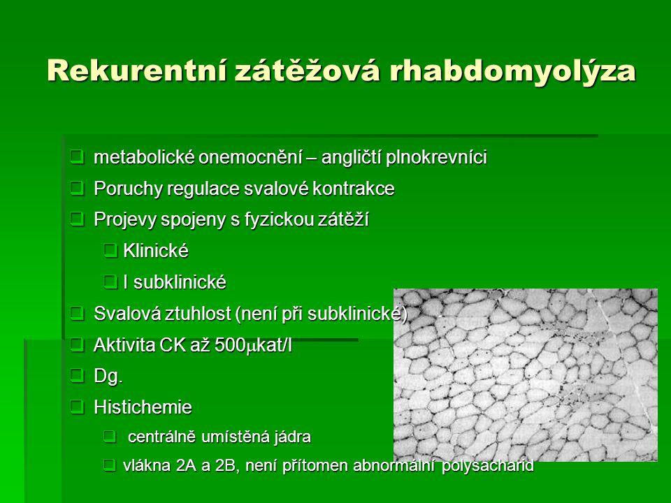 Rekurentní zátěžová rhabdomyolýza  metabolické onemocnění – angličtí plnokrevníci  Poruchy regulace svalové kontrakce  Projevy spojeny s fyzickou z