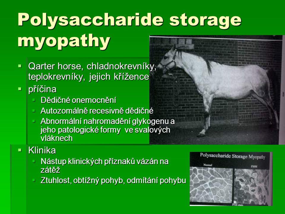 Polysaccharide storage myopathy  Qarter horse, chladnokrevníky, teplokrevníky, jejich křížence  příčina  Dědičné onemocnění  Autozomálně recesivně
