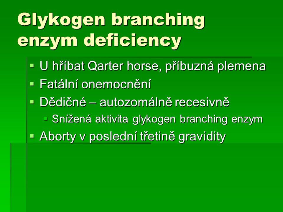 Glykogen branching enzym deficiency  U hříbat Qarter horse, příbuzná plemena  Fatální onemocnění  Dědičné – autozomálně recesivně  Snížená aktivit