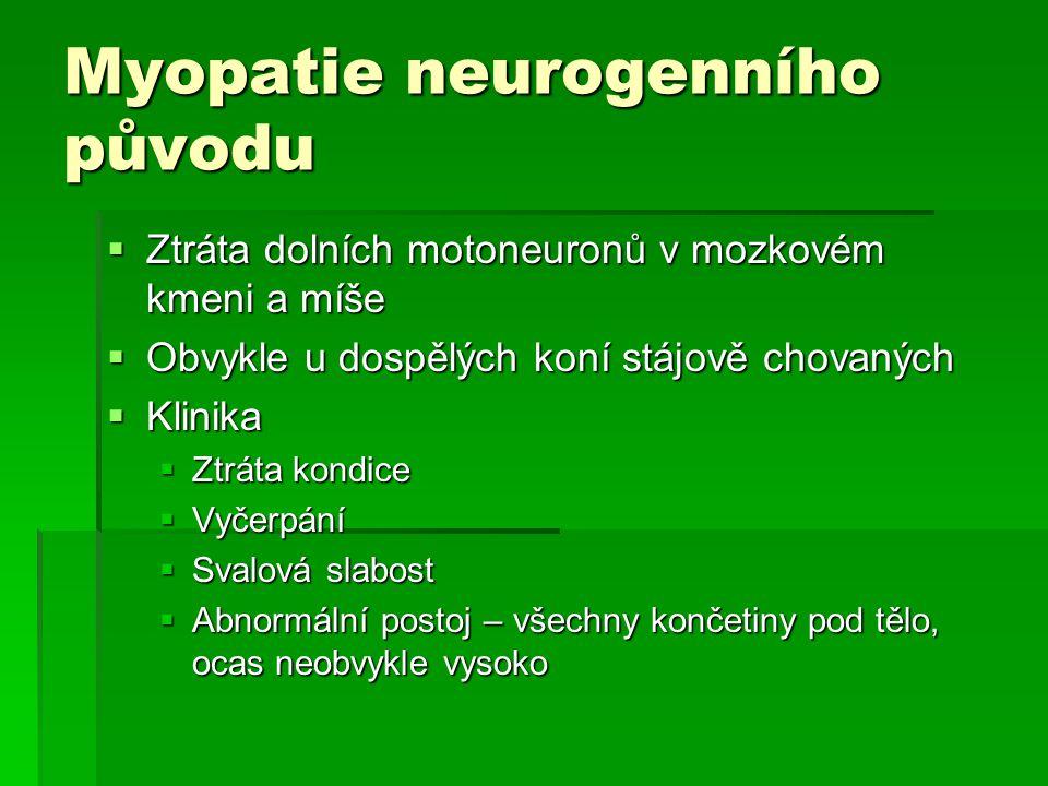 Myopatie neurogenního původu  Ztráta dolních motoneuronů v mozkovém kmeni a míše  Obvykle u dospělých koní stájově chovaných  Klinika  Ztráta kond