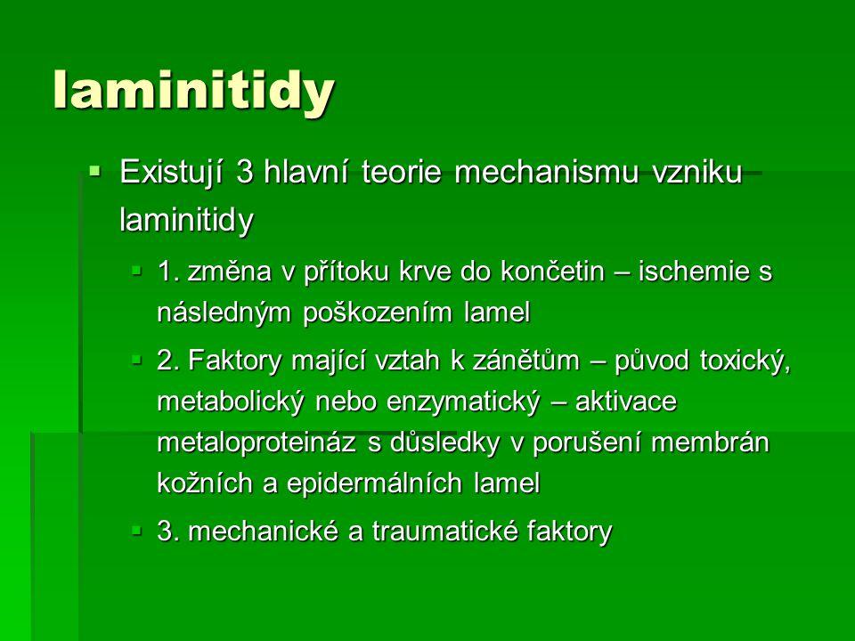 laminitidy  Existují 3 hlavní teorie mechanismu vzniku laminitidy  1. změna v přítoku krve do končetin – ischemie s následným poškozením lamel  2.