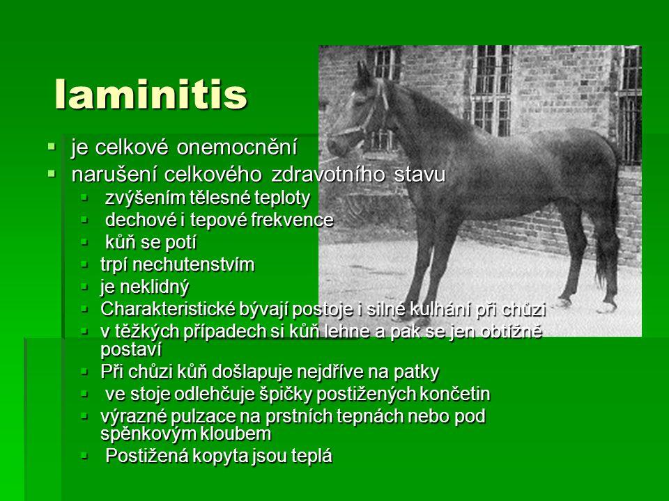 laminitis laminitis  je celkové onemocnění  narušení celkového zdravotního stavu  zvýšením tělesné teploty  dechové i tepové frekvence  kůň se po
