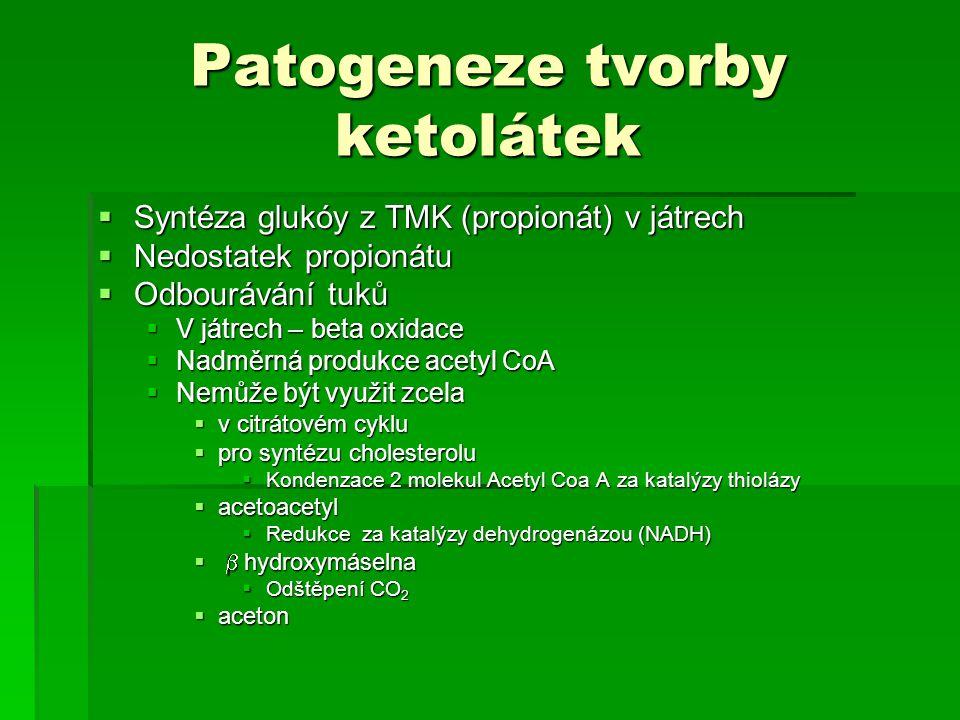 Patogeneze tvorby ketolátek  Syntéza glukóy z TMK (propionát) v játrech  Nedostatek propionátu  Odbourávání tuků  V játrech – beta oxidace  Nadmě