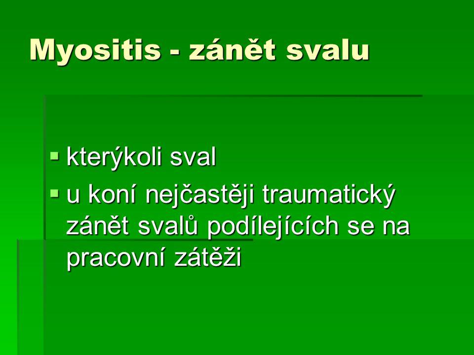 Myositis - zánět svalu  kterýkoli sval  u koní nejčastěji traumatický zánět svalů podílejících se na pracovní zátěži