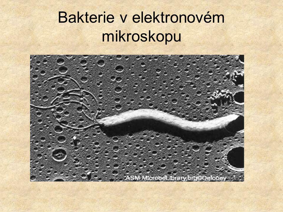 Bakterie v elektronovém mikroskopu