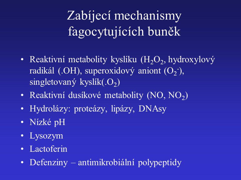 Zabíjecí mechanismy fagocytujících buněk Reaktivní metabolity kyslíku (H 2 O 2, hydroxylový radikál (.OH), superoxidový aniont (O 2 - ), singletovaný