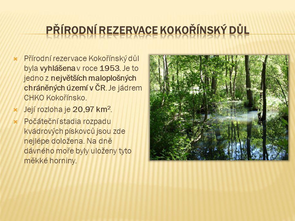  Přírodní rezervace Kokořínský důl byla vyhlášena v roce 1953. Je to jedno z největších maloplošných chráněných území v ČR. Je jádrem CHKO Kokořínsko