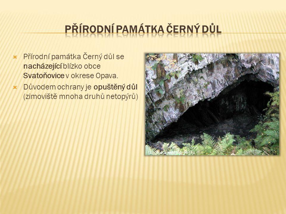 Přírodní památka Černý důl se nacházející blízko obce Svatoňovice v okrese Opava.  Důvodem ochrany je opuštěný důl (zimoviště mnoha druhů netopýrů)