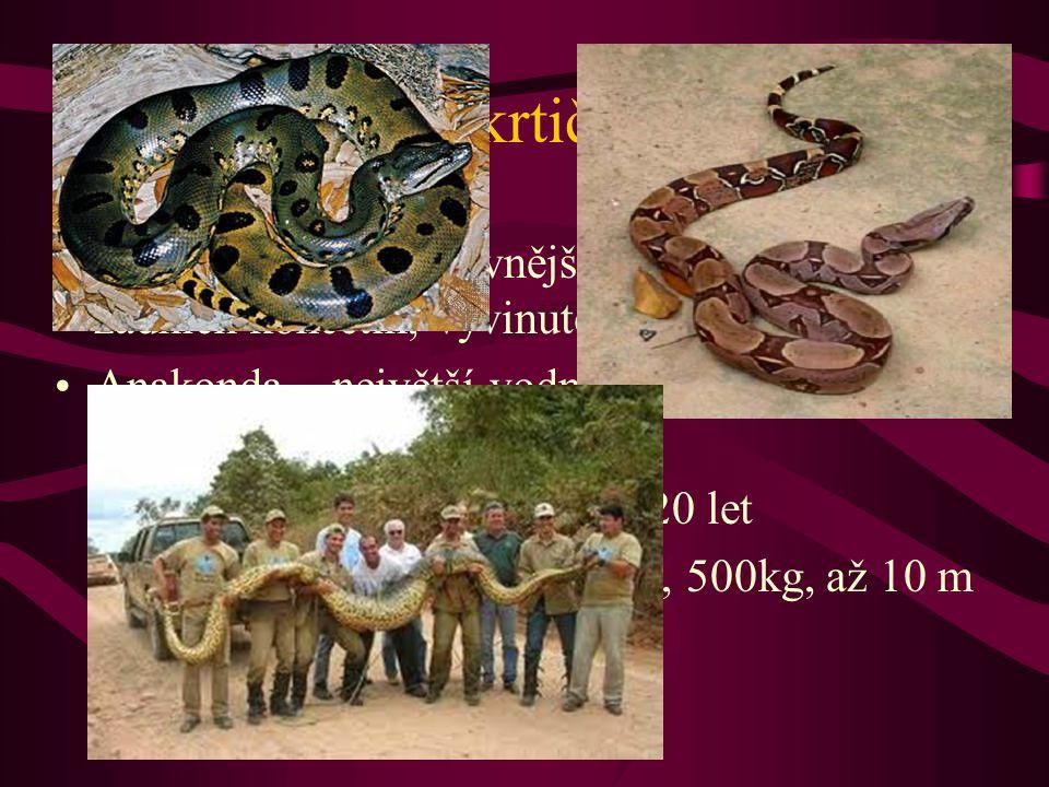 Škrtiči Hroznýš – nejprimitivnější hadi (zbytky zadních končetin, vyvinuté obě plíce) Anakonda – největší vodní škrtič, vydrží i přes rok bez potravy - až 80 mláďat, až 20 let - JA, průměr 60 cm, 500kg, až 10 m - uloví i jaguára